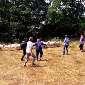 Gruppe beim hüten der Schafe