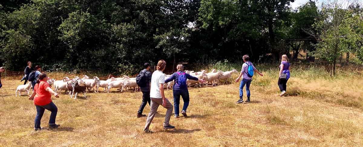Teilnehmer beim Schafe hüten auf der Weide